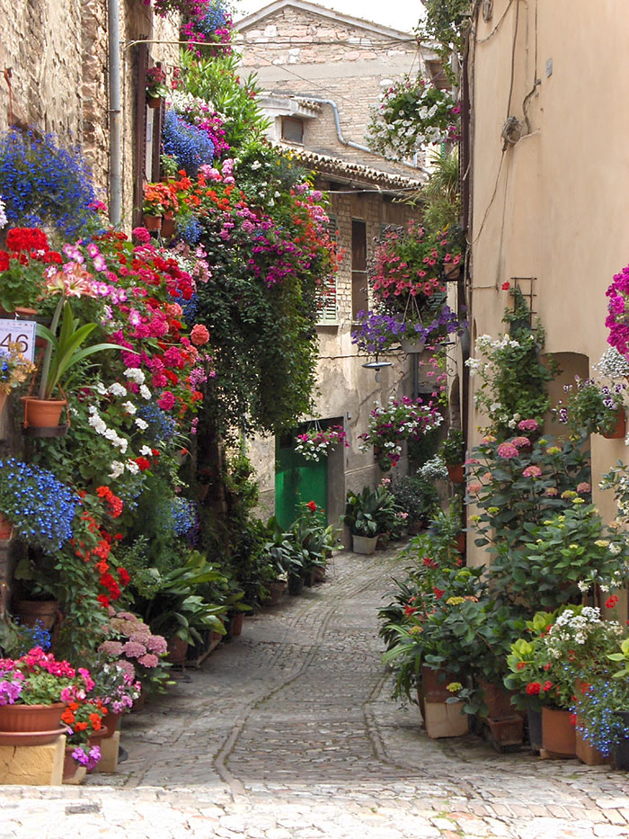beautiful-streets-trellis-canopies-11__700 spello italy
