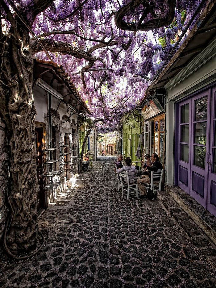 beautiful-streets-trellis-canopies-4__700 molyvos gorog
