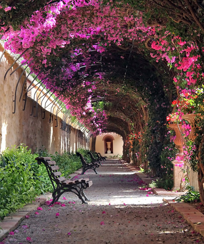 beautiful-streets-trellis-canopies-8__700 valencia spain