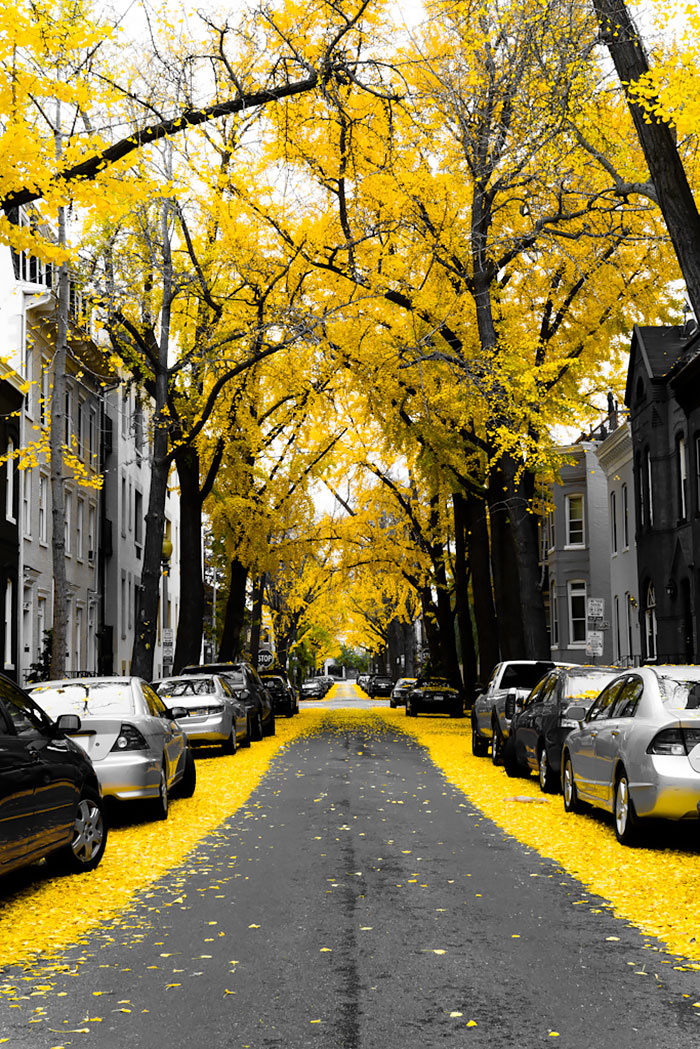 beautiful-streets-trellis-canopies- washington