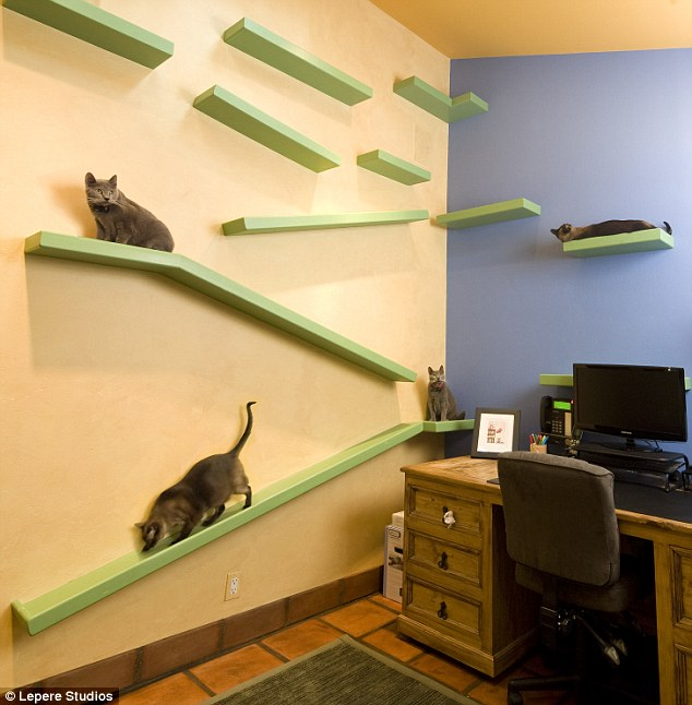 cats home 2
