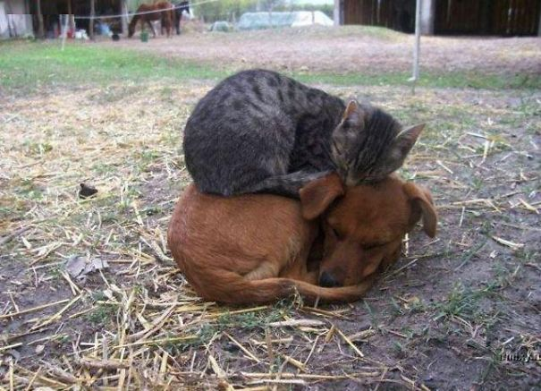 cute-cats-sleeping-on-dogs-5__605
