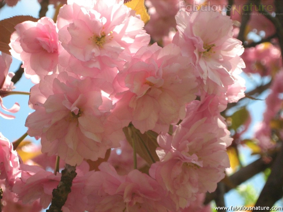 Pictures_of_Spring_46