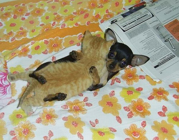 unlikely-sleeping-buddies-animal-friendship-201__605