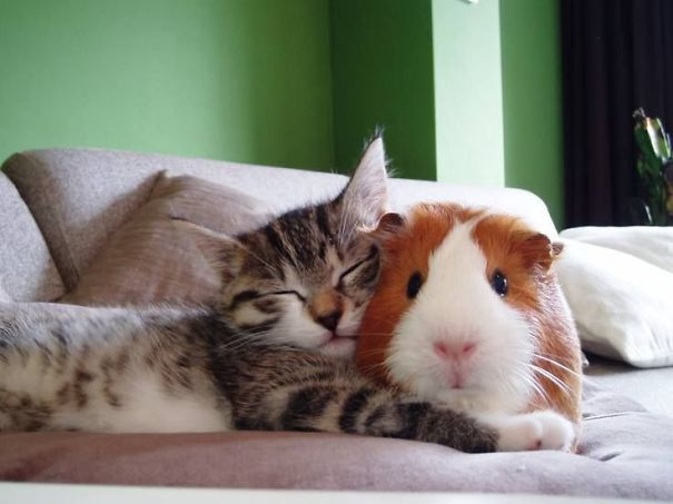 unlikely-sleeping-buddies-animal-friendship-231__605