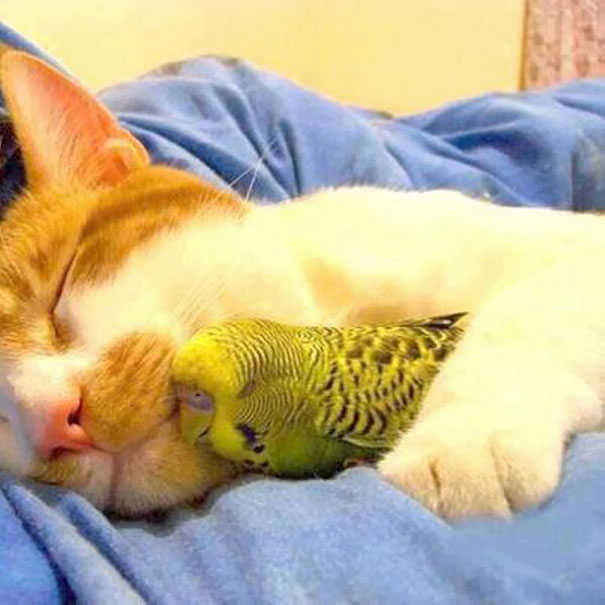 unlikely-sleeping-buddies-animal-friendship-371__605