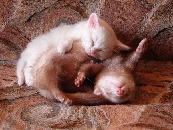 unlikely-sleeping-buddies-animal-friendship-521__605