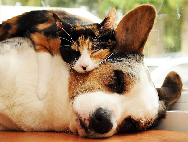 unlikely-sleeping-buddies-animal-friendship-71__605