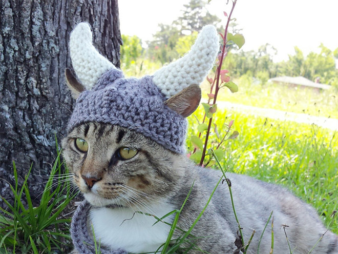 winter-hat-viking-cat