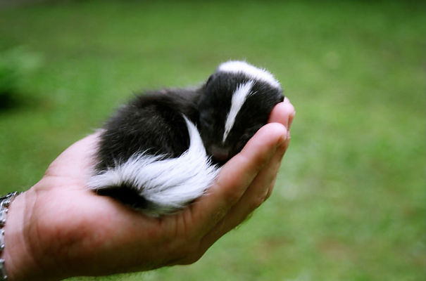 cute-baby-animals-palms-hands-11__605