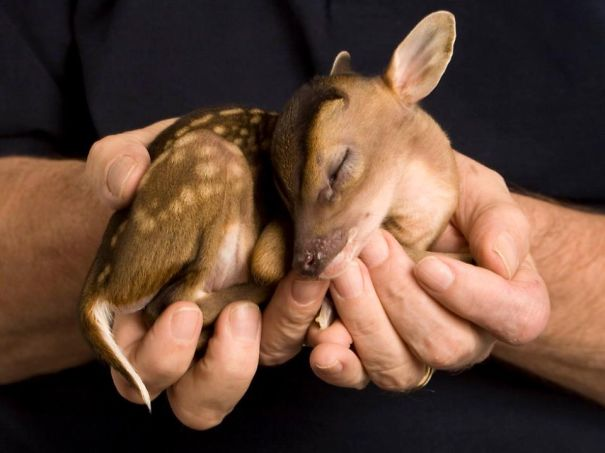 cute-baby-animals-palms-hands-21__605