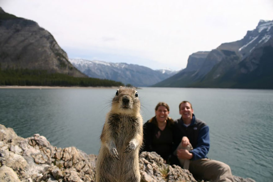 funny-animal-photobombs-1__880