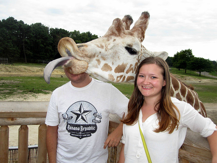 funny-animal-photobombs-9__880
