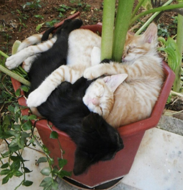 funny-cat-plant-1__605