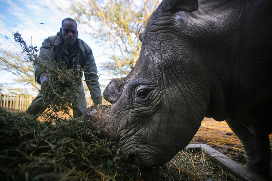 last-northern-white-rhinoceros-conservation-rangers-kenya-3