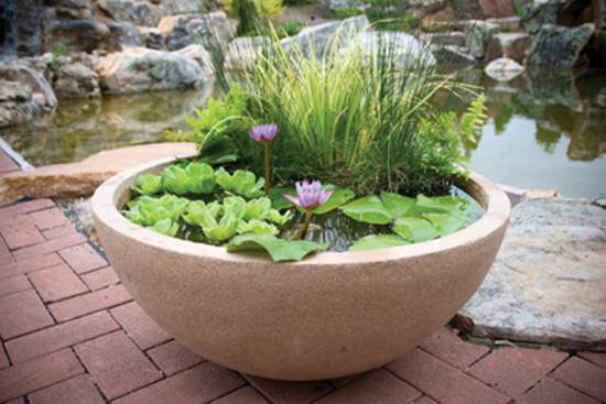How-to-DIY-Mini-Garden-Pond-in-a-Container-4