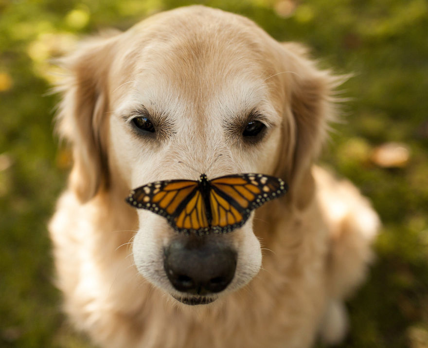 animals-with-butterflies-14__880