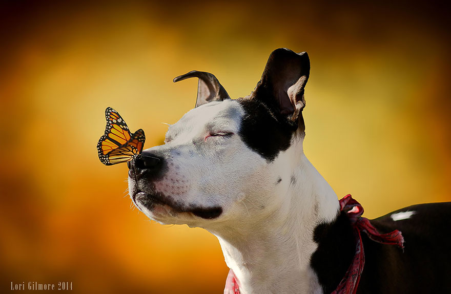 animals-with-butterflies-15__880