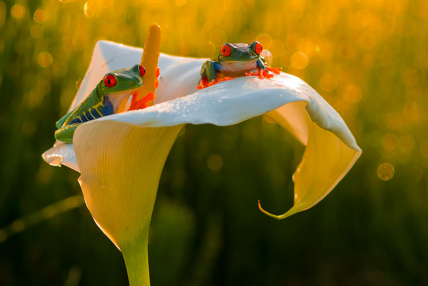 frog-photography-24__880