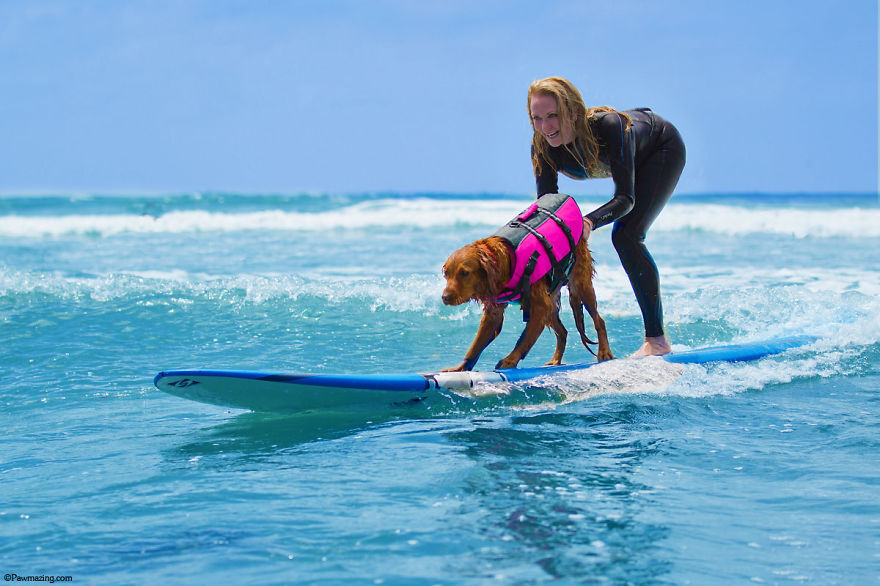 I-allowed-my-dog-to-be-who-she-truly-is-and-she-jumped-on-a-surfboard.-2__880