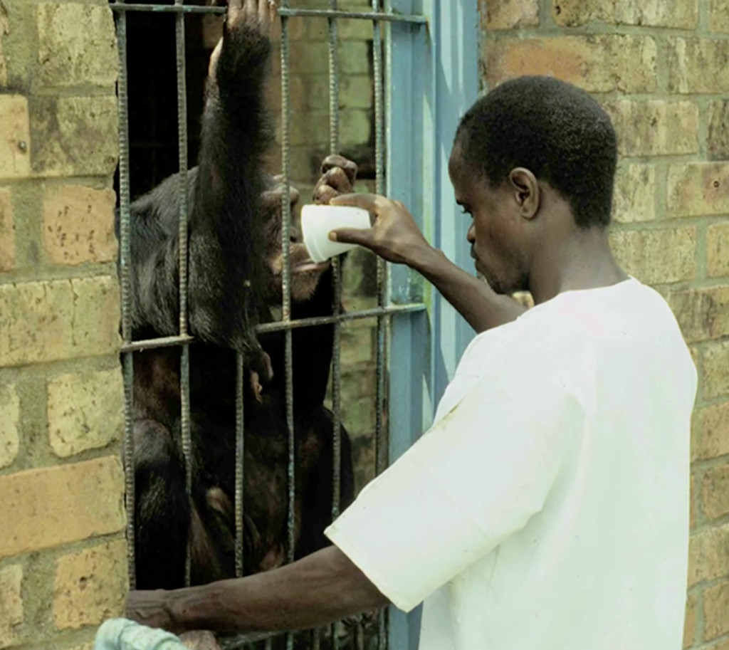 chimp-research-liberia-cage-1024x913