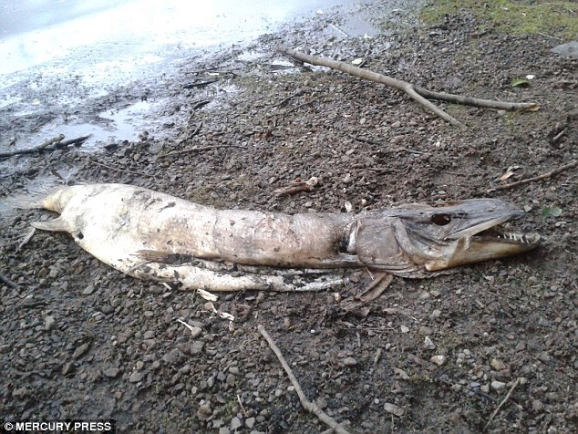 2B16A4A400000578-3184882-The_discovery_of_the_corpse_on_the_shore_of_Hollingworth_Lake_in-a-13_1438688463994