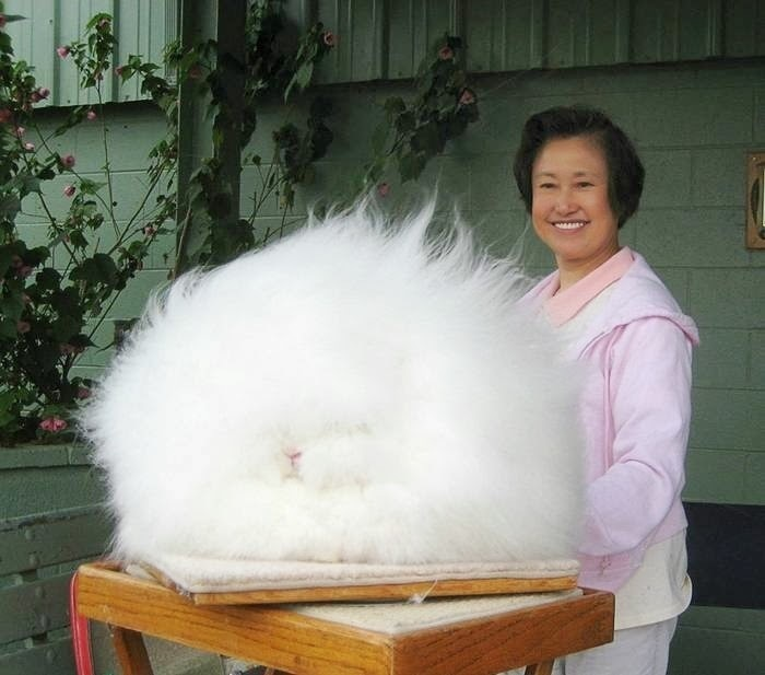 The world's fluffiest bunny