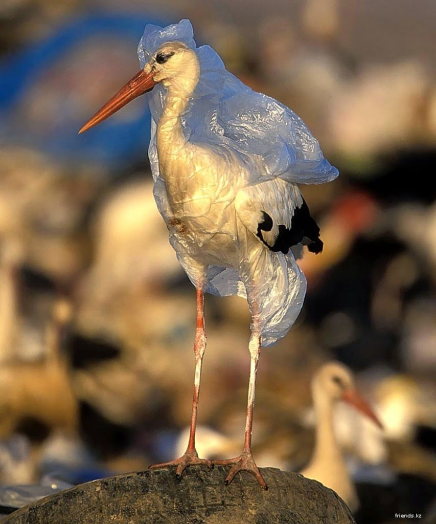 You-Will-Want-To-Recycle-Everything-After-Seeing-These-Photos-A-Stork-Trapped-In-Plastic