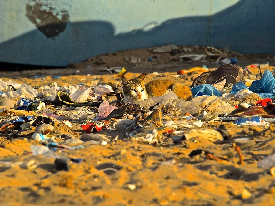You-Will-Want-To-Recycle-Everything-After-Seeing-These-Photos-Cat-Sunning-In-Trash-Wetsahara-Morocco