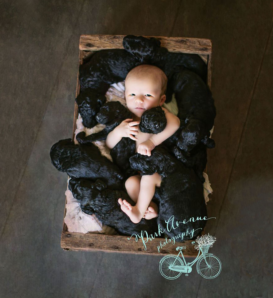 dog-gives-birth-puppies-mother-baby-same-day-kami-klingbeil-7