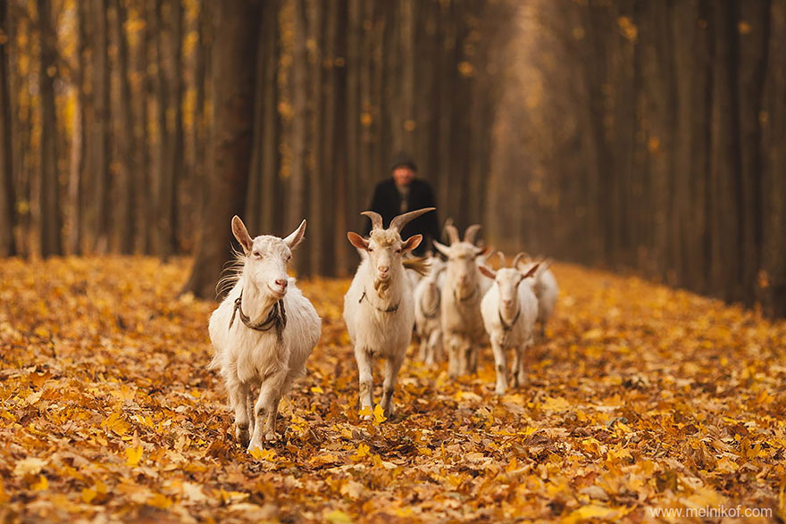autumn-animals-13__880