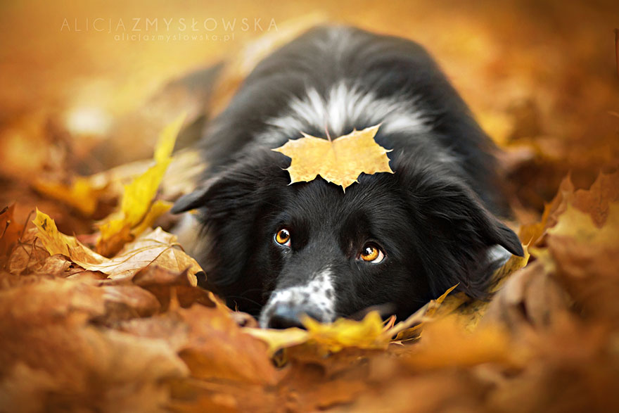 autumn-animals-225__880