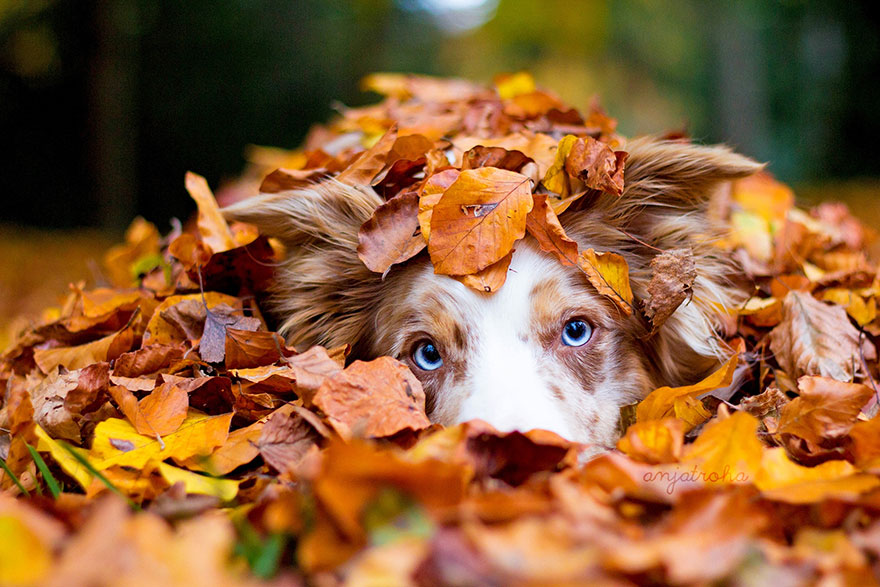 autumn-animals-photgraphy-107__880