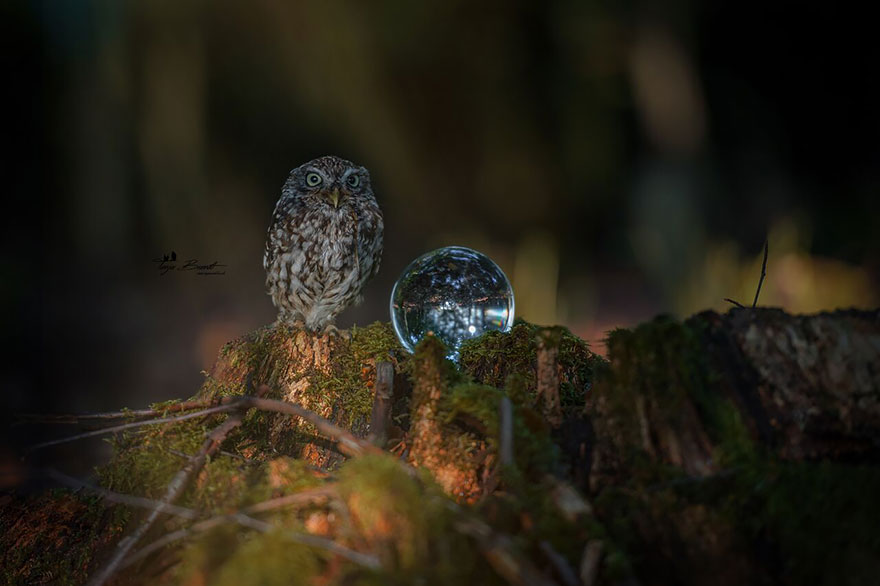 owl-and-mushrooms-tanja-brandt-101