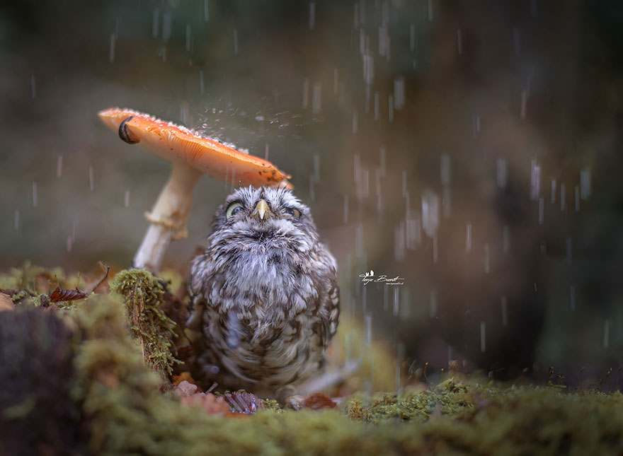 owl-and-mushrooms-tanja-brandt-1__880