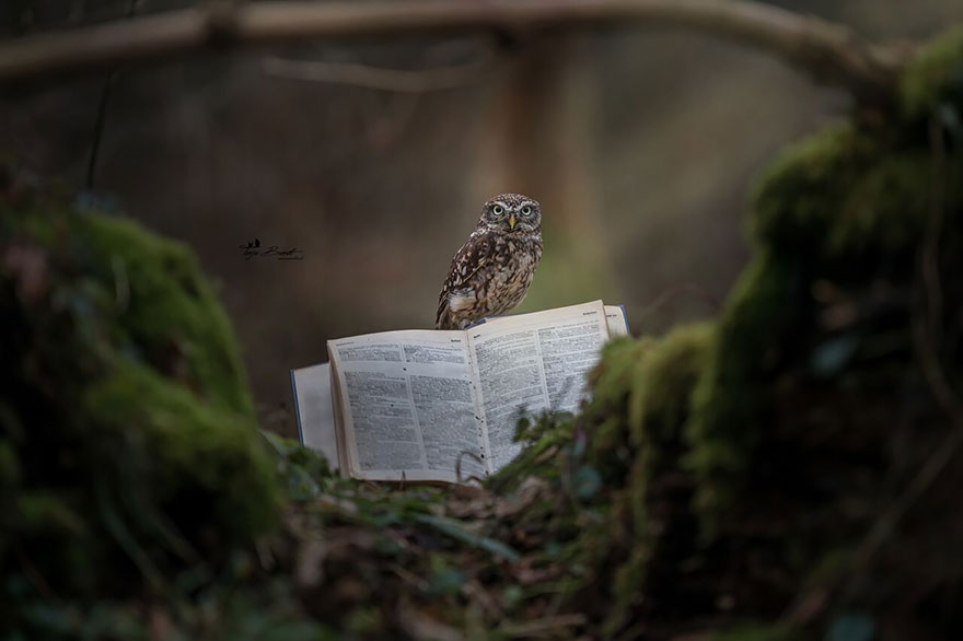 owl-and-mushrooms-tanja-brandt-91