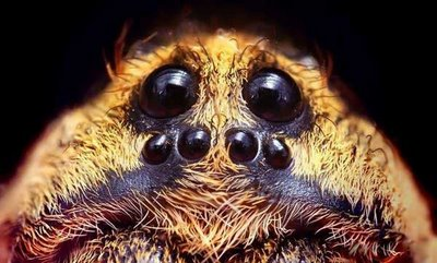 cute-animals-spiders