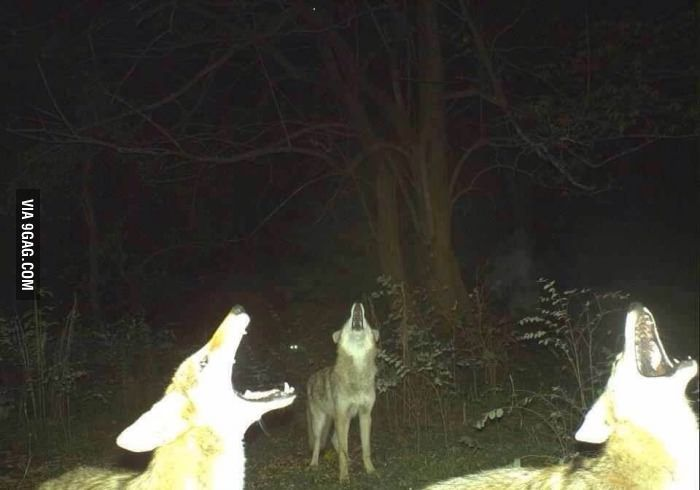 03-trail-cam-animals-funny-when-humans-arent-around