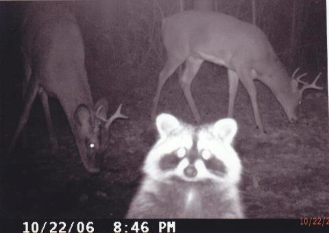 06-trail-cam-animals-funny-when-humans-arent-around