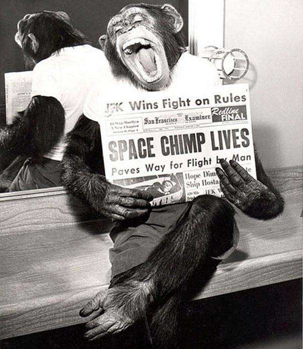 1961: Ham the Chimpanzee posing with a newspaper after becoming the first hominid in space.