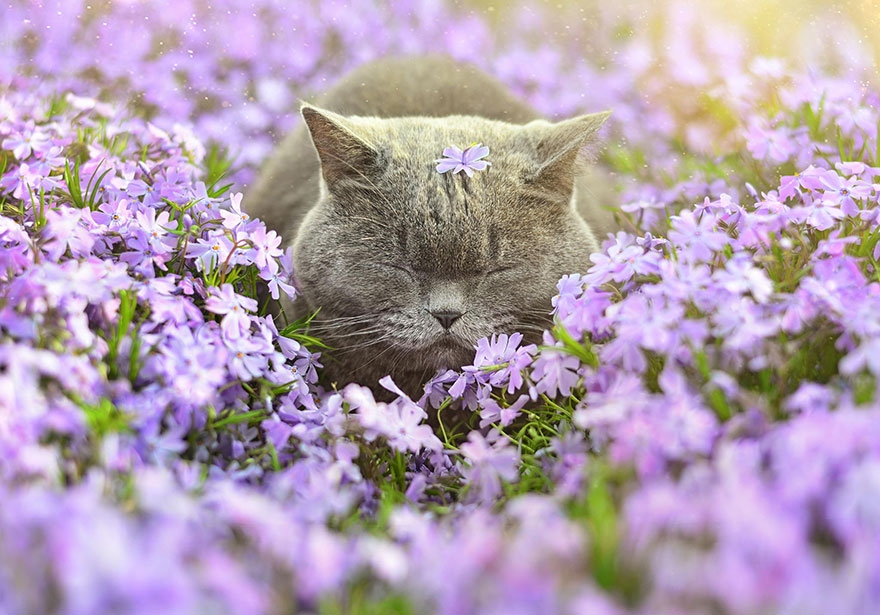 animals-smelling-flowers-261__880