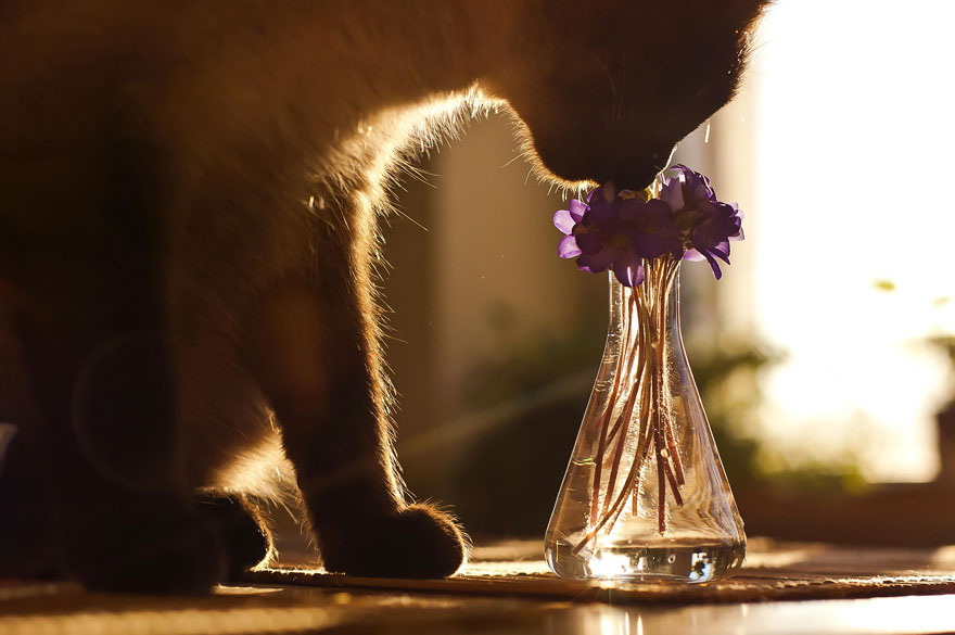 animals-smelling-flowers-30__880