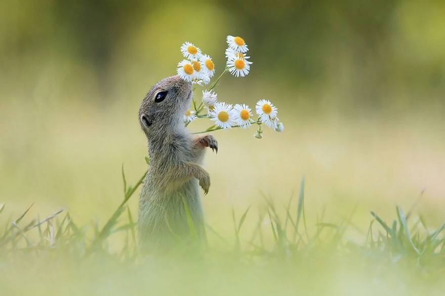 animals-smelling-flowers-34__880