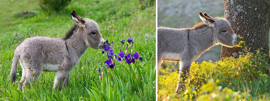 animals-smelling-flowers-7__880