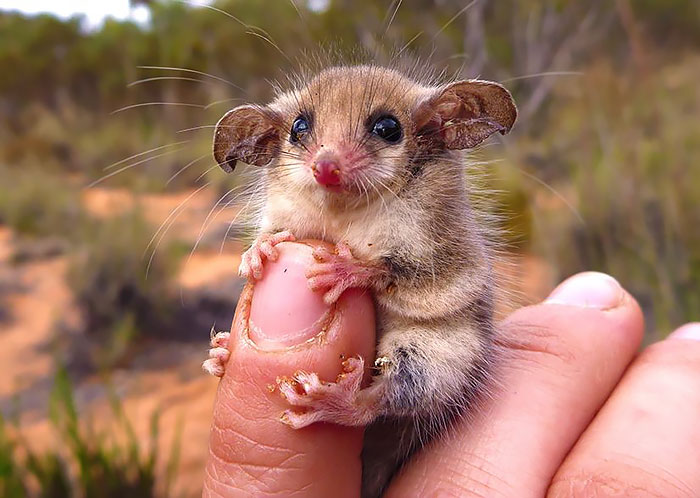 cute-possums-24__700