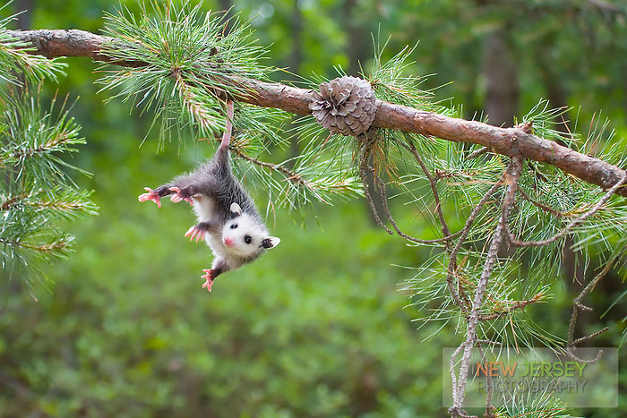 cute-possums-25__700