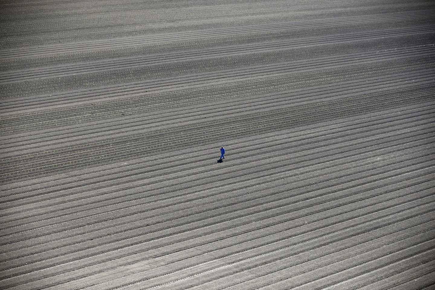 A worker walks through farm fields in Los Banos, California, United States, May 5, 2015. California water regulators on Tuesday adopted the state's first rules for mandatory cutbacks in urban water use as the region's catastrophic drought enters its fourth year. Urban users will be hardest hit, even though they account for only 20 percent of state water consumption, while the state's massive agricultural sector, which the Public Policy Institute of California says uses 80 percent of human-related consumption, has been exempted. REUTERS/Lucy Nicholson TPX IMAGES OF THE DAY - RTX1BQUX