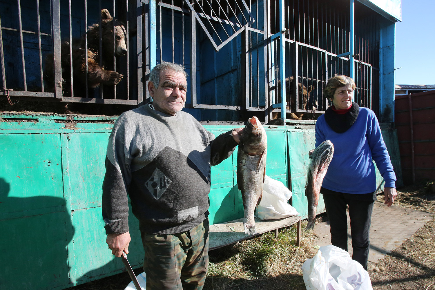 Jobless Hovhamnes and Alvina Madoyan have taken on caring for the animals