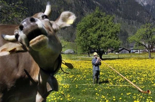 animal-photobombs-37