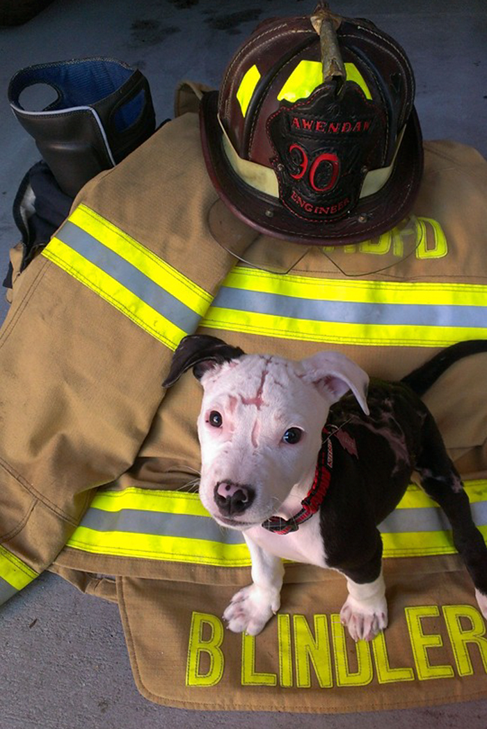 firefighter-dog-burn-victim-mascot-jake-william-lindler-18